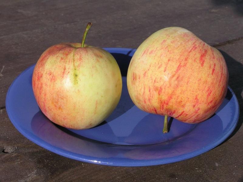 Все о яблоне Боровинка: описание и фото сорта, особенности выращивания и другие нюансы