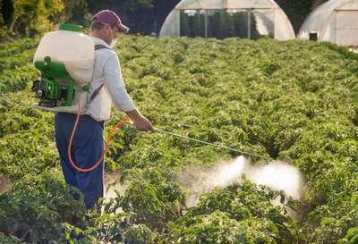 Секреты эффективной обработки томатов нашатырным спиртом. Вы забудете о болезнях и вредителях!