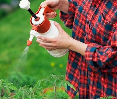 Нашатырный спирт для рассады помидор
