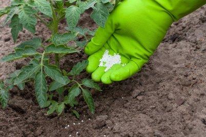 Томат признаки нехватки калия и других микроэлементов чем необходимо подкормить