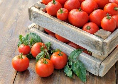 Значение фосфора для томатов: почему при его недостатке не будет урожая? А также чем удобрить растения, чтобы спасти