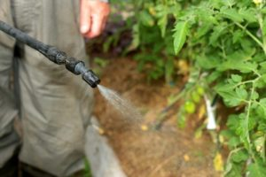 Выполните опрыскивание томатов борной кислотой и ваши растения преобразятся! Зачем это делать и какая концентрация раствора правильная