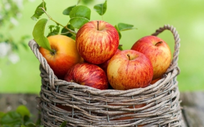 Сорт яблони Коричное полосатое: описание, посадка и уход