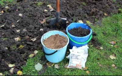 Как и чем лучше обработать землю от фитофторы перед посадкой: проверенные временем средства