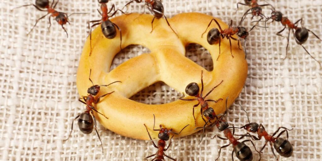 Виды насекомых в квартире с фото и названиями, как избавиться